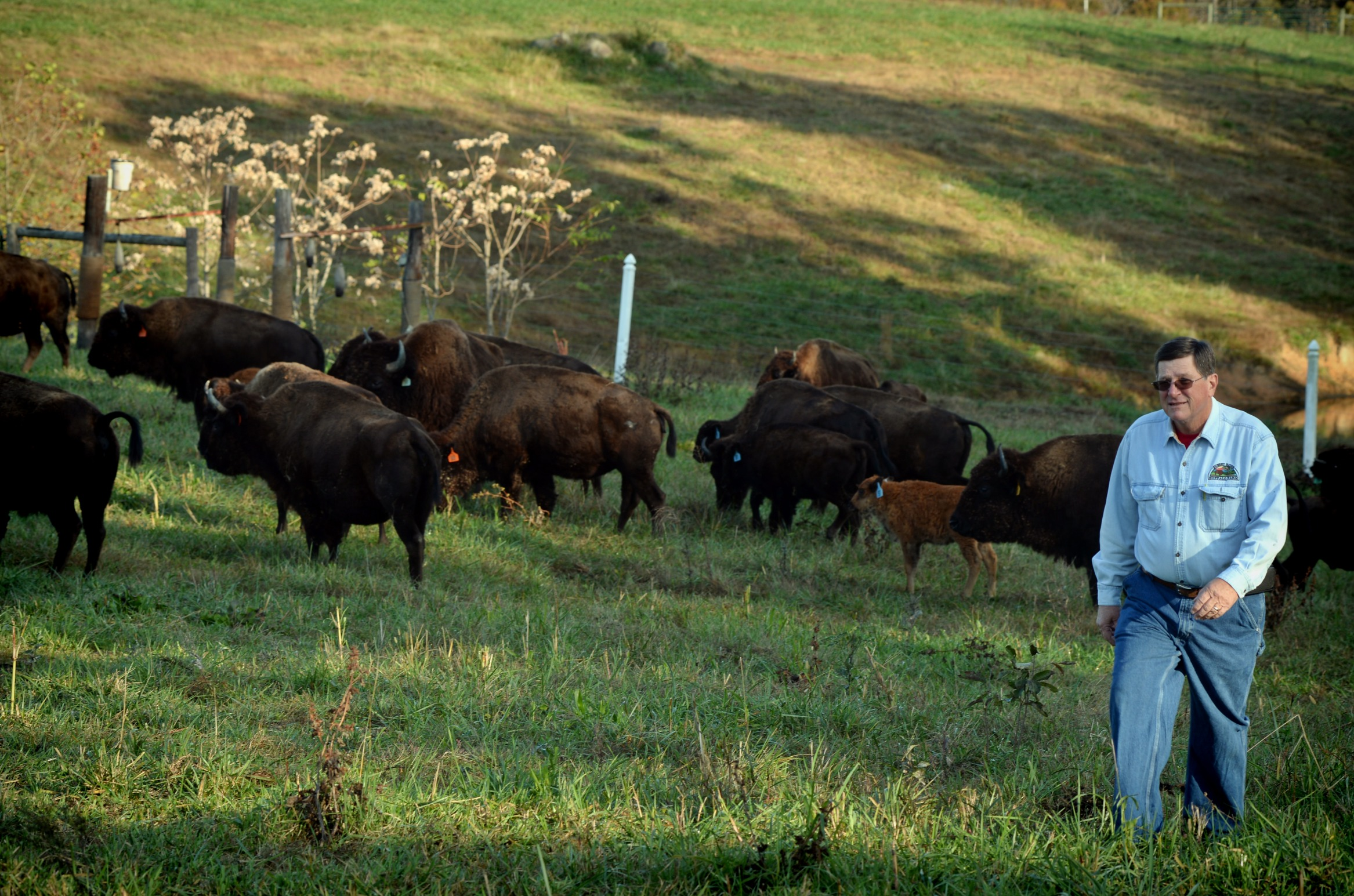 Views of Jack Pleasant and the Sunset Ridge Buffalo Farm near Roxboro, NC.